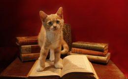 De 5 meest gelezen boeken ter wereld